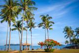 말레이시아의 여름바다, 야자나무