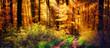 Schöner Wald im Herbst, Lichtstrahlen fallen auf einen Waldweg