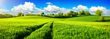 Fototapety Ländliche Idylle, Panorama mit weiten grünen Wiesen und blauem Himmel