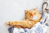 Cute ginger cat lying in bed under a blanket. Fluffy pet comfortably settled to sleep. Cozy home background with funny pet. Flat lay. Top view, place for text.