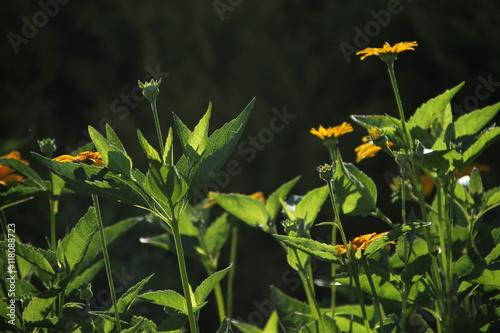 Zdjęcia na płótnie, fototapety, obrazy : Цветы