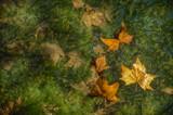 hojas secas caídas en otoño flotando en agua