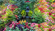 Colorful Flower Display in a Canadian Garden
