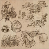 Rice crop. Agriculture. An hand drawn vector set. - 118150109