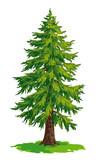 Vector drawing of fir tree