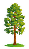 Vector drawing of pine tree - 118162162