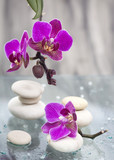Spa still life with pink flowers and white zen stone - 118173982