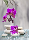 Spa still life with pink flowers and white zen stone - 118173997