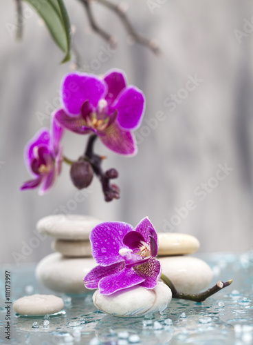 Fototapeta na wymiar Spa still life with pink flowers and white zen stone