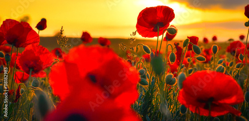 Aluminium Rood Poppies