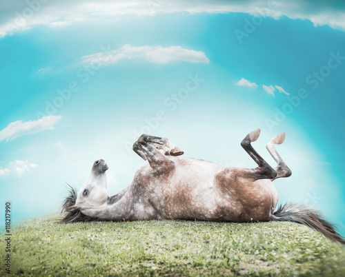 Horse lying on his back , feet up and resting on a hill of green grass on a background of blue sky with clouds