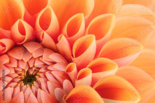 Fototapeta samoprzylepna Orange flower petals, close up and macro of chrysanthemum, beautiful abstract background