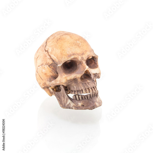 Poster Human skull on isolated white background
