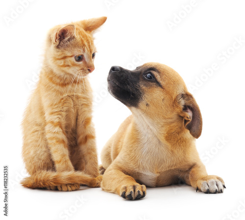 Red cat and puppy. - 118232535