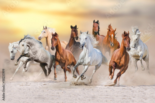 Obraz Fotograficzny Horse herd run fast in desert dust against dramatic sunset sky