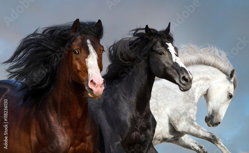 Portrait of three beautiful horses in motion against blue sky