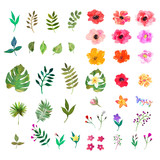 Vector floral set. Colorful collection with leafs and flo