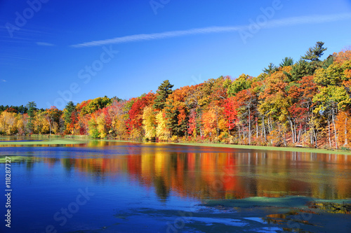 Foto op Canvas Herfst autumn colorful trees under morning sunlight reflecting in tranquil river