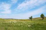 spring blooming Kerch steppe, Crimea