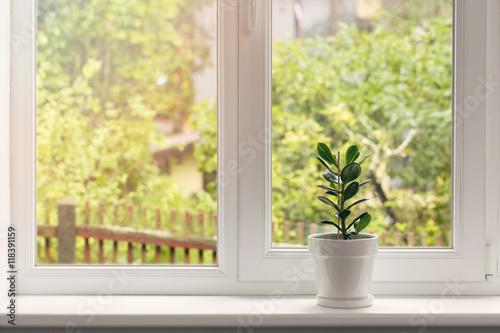 crassula flower in pot on windowsill - 118391159