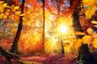 Malerischer Herbst im Wald mit viel Sonne und lebendigen Farben