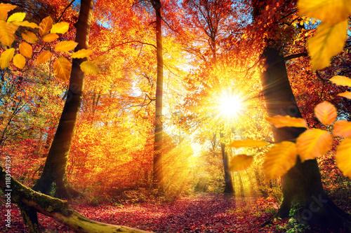 Poster Malerischer Herbst im Wald mit viel Sonne und lebendigen Farben
