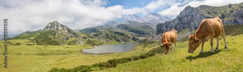 Deurstickers Bergen Lago de Enol Bergsee im Parque Nacional de los Picos de Europa (Picos d'Europa) Asturies (Asturien, Asturias) Spanien (España)