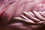 Flamingo Feathers - Bird Abstract Background