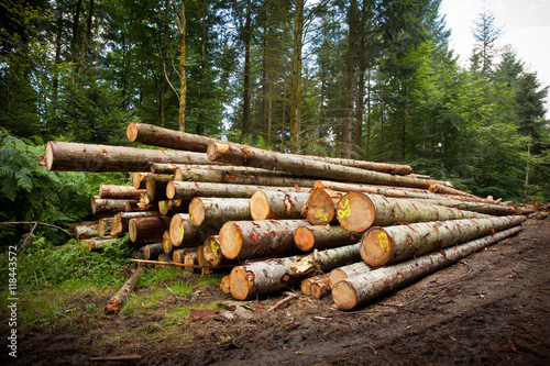 bois tronc coupe débardage bille sapin gestion forestière for - 118443572