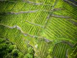 vigneti di Valtellina - vista aerea