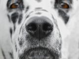 Beautiful and curious dog