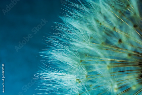 Dandelion flower abstract background. shallow depth of field