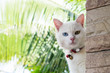 white cat playing outside