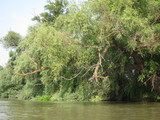 Danube river with a quiet current and Beautiful landscape from the Danube Delta Biosphere Reserve in Ukraine