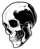 The image of the skull. Vector illustration. Isolated on white.