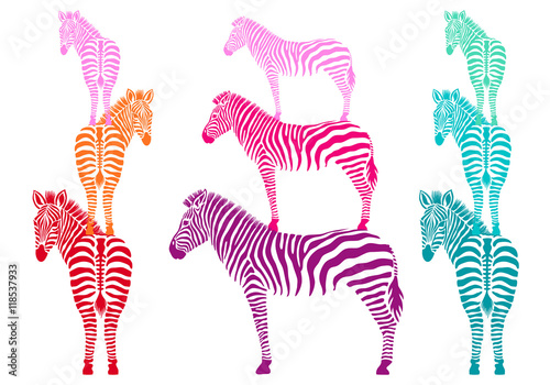 colorful zebras, vector set