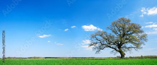 ladnie-ksztaltujacy-debowy-drzewo-na-lace-w-wiosna-krajobrazie-pod-niebieskim-niebem-z-chmurami