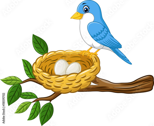 Bird with egg in the nest isolated on white background  - 118591702