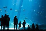 Silhouettes of People looking at Fish in huge Aquarium, Fish Tank - 118606162