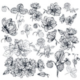 Vector pack of engraved high detailed flowers for design - 118619929