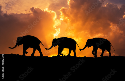 Plakát, Obraz silhouette elephants relationship with trunk hold family tail walking together o