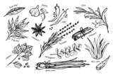 Fototapety Hand drawn vintage illustration - herbs and spices. Vector