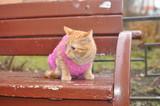 Котёнок на скамейке осенью