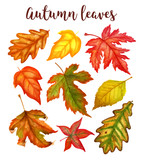 Fototapety Autumn leaves a watercolor on a white background. vector illustration