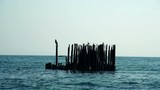 Birds sit on old rusty pier in the sea