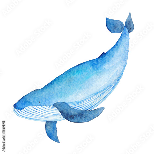Plakat Blue Whale Watercolor hand-painted Illustration Sea animals Blue Whales Isolated