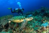 Scuba dive sea turtle