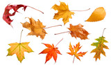 Fall and autumn leaves isolated on a white background collection