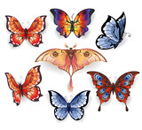 Set of bright exotic butterflies