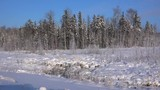 Frozen winter forest.